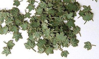 Plusmodel Maple Leaves 1:35